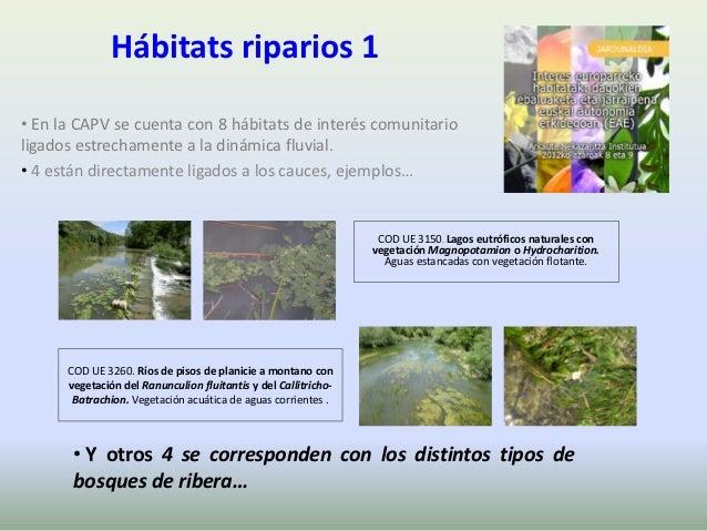 Hábitats riparios 1• En la CAPV se cuenta con 8 hábitats de interés comunitarioligados estrechamente a la dinámica fluvial...
