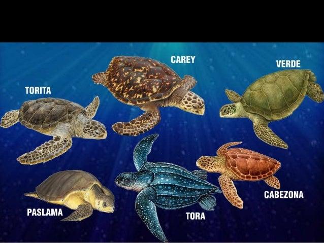 Hábitats Tortugas Marinas
