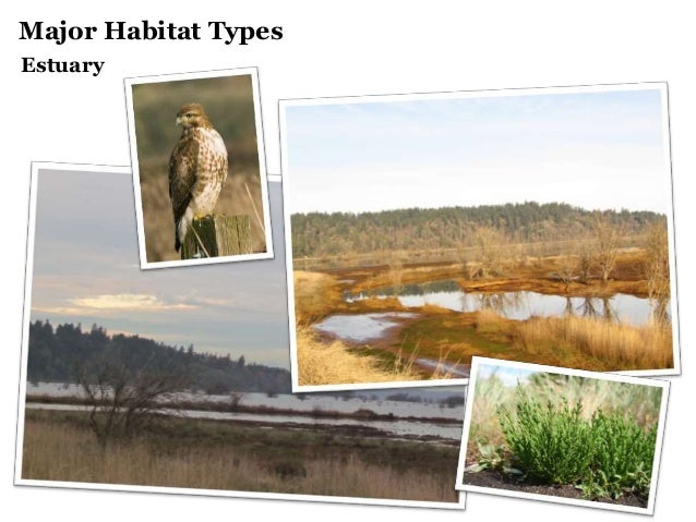 Major Habitat Types Estuary