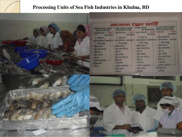shrimp industry in bd Commercial fishing & seafood industry contacts - bangladesh a - b see also sea-ex trade seafood directory for seafood companies in bangladesh siam canadian group limited.
