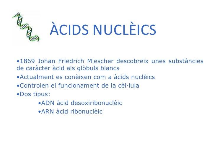 ÀCIDS NUCLÈICS <ul><li>1869 Johan Friedrich Miescher descobreix unes substàncies de caràcter àcid als glòbuls blancs </li>...
