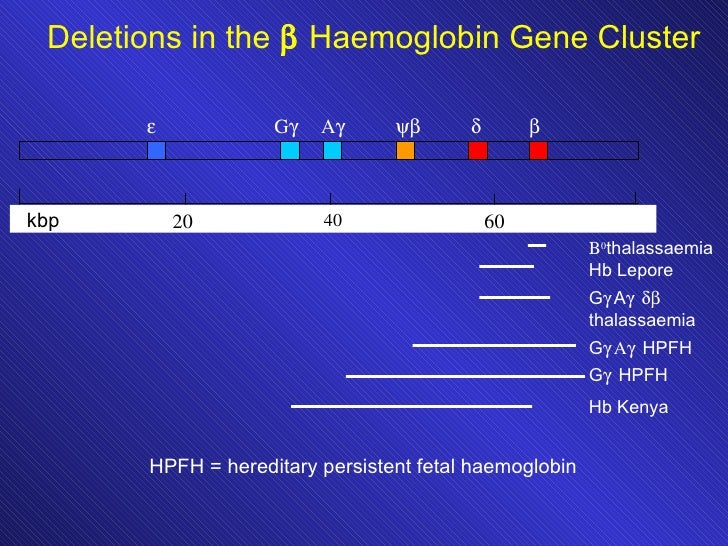 hemoglobin malaria haemoglobinopathies • hemoglobin s • hemoglobin c  hbs – β-thalassemia deletions, non-deletions + all protective against malaria most common monogenic diseases, ~7% of humans are carrying one of the genetic mutations responsible for these disorders hbe –  global health burden of haemoglobinopathies.
