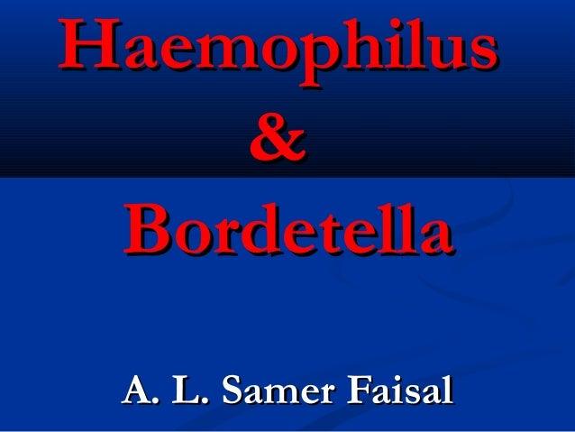 HaemophilusHaemophilus && BordetellaBordetella A. L. Samer FaisalA. L. Samer Faisal