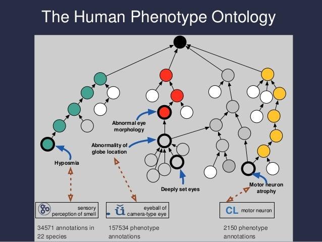 On the frontier of genotype-2-phenotype data integration