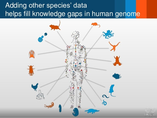 Adding other species' data helps fill knowledge gaps in human genome