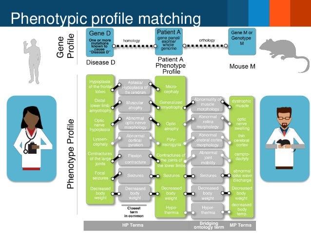 Phenotypic profile matching