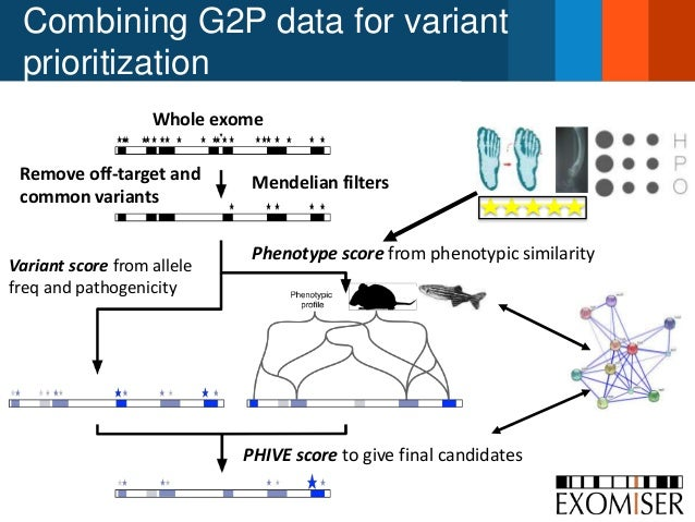 Combining G2P data for variant prioritization Whole exome Remove off-target and common variants Variant score from allele ...