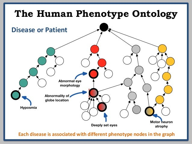 Integrating clinical and model organism G2P data for disease discovery Slide 3