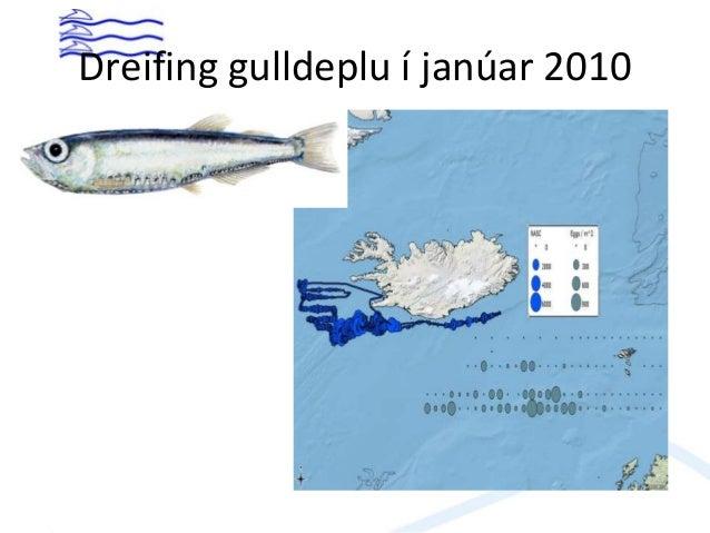 Gulldepla • Mjög litlu landað í sl. vetur • Aflinn 2009 rúm 46 þús. tonn, tæp 18 þús. 2010 og um 9 þús. tonn 2011. • Stofn...