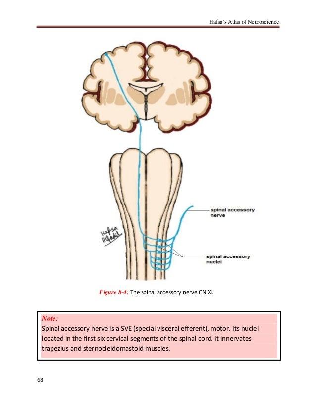 Hafsa\'s atlas of neuroscience