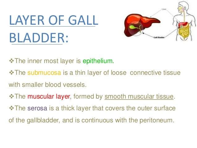 Gall Bladder Amp Pancreas