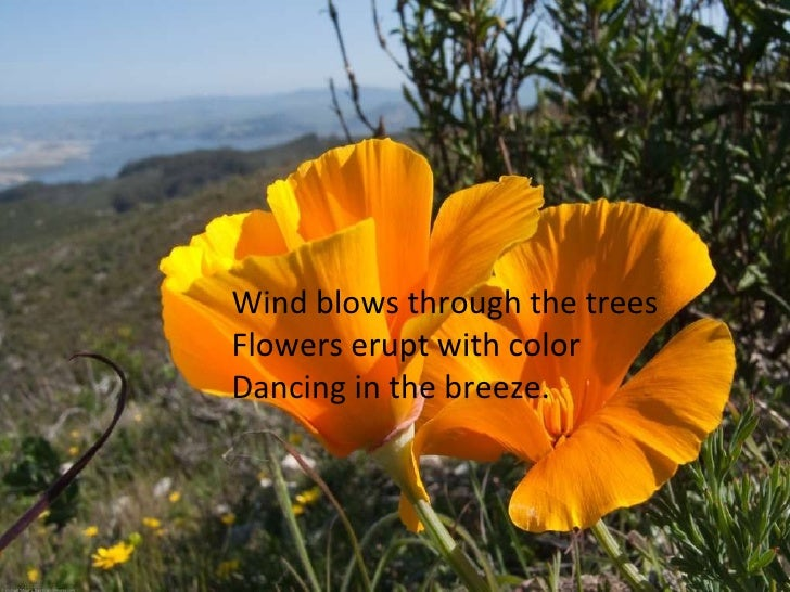 Wind blows through the trees Flowers erupt with color Dancing in the breeze.