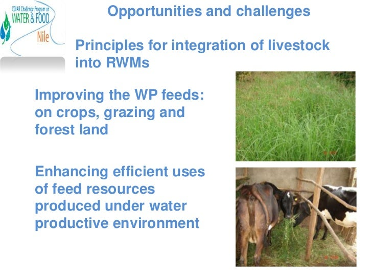 Opportunities and challenges     Principles for integration of livestock     into RWMsImproving the WP feeds:on crops, gra...