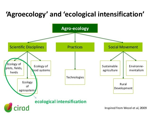 Enhancing The Roles Of Ecosystem Services In Agriculture