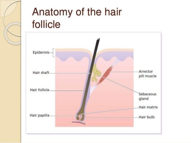 Hair and nail