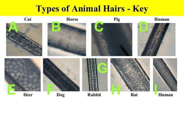 how to use horse shampoo on human hair