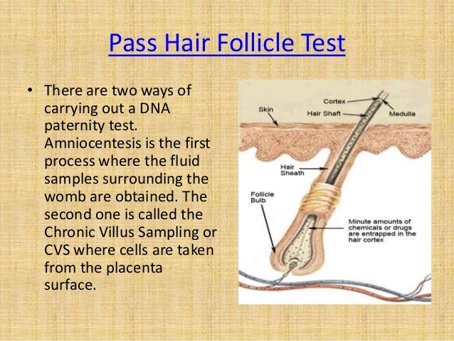 how to pass hair sample drug test - Maddenrecall