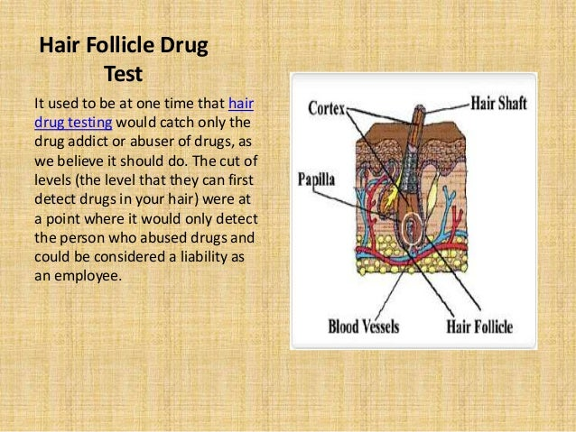 Hair follicle drug test process and cost
