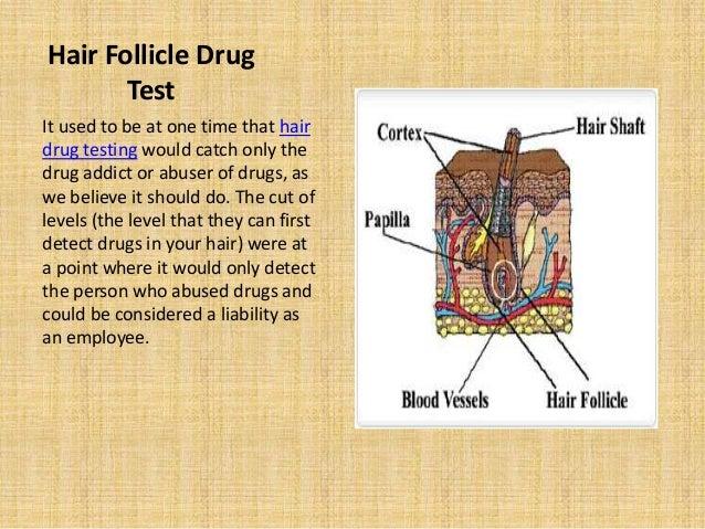 USG Scan - Follicular Monitoring Test - Test Results ...