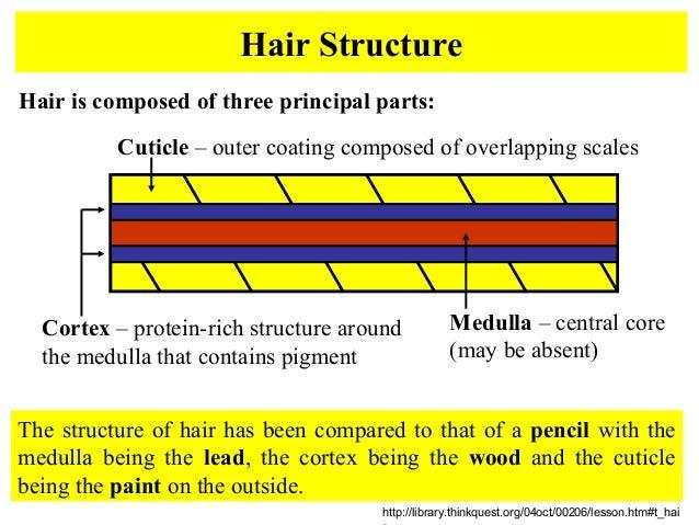 Hairsfibers