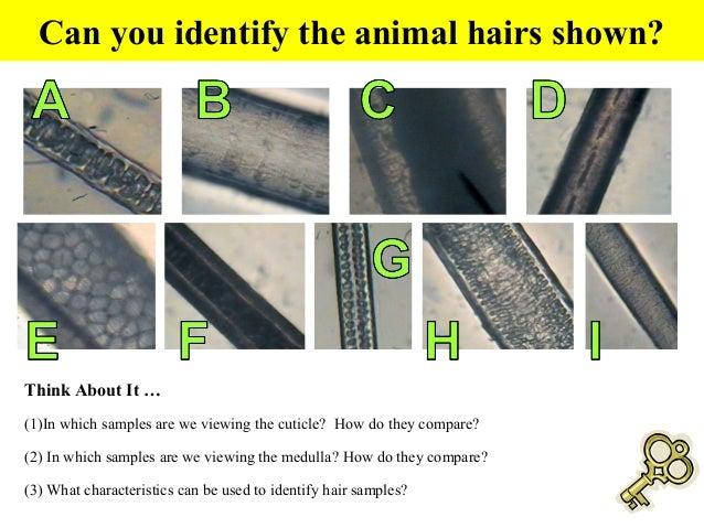 Hairs And Fibers