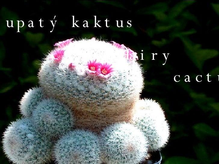 Chlupatý kaktus Hairy  cactus
