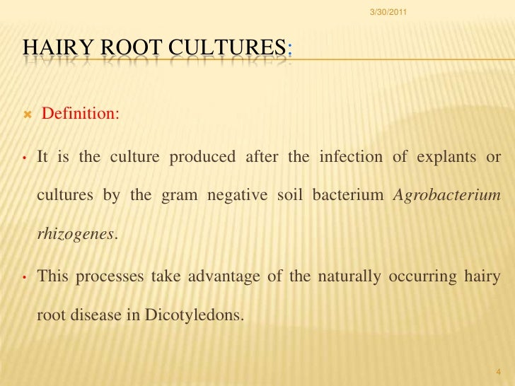 application of hairy root culture pdf