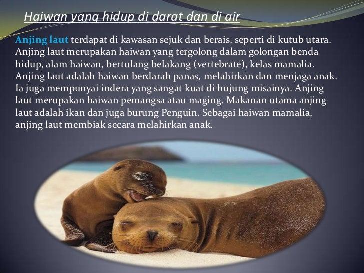 Haiwan yang hidup di darat dan di airAnjing laut terdapat di kawasan sejuk dan berais, seperti di kutub utara.Anjing laut ...