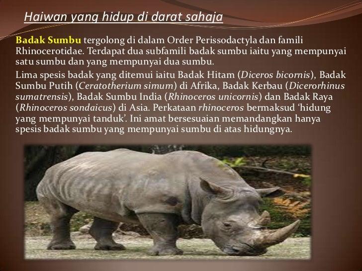 Haiwan yang hidup di darat sahajaBadak Sumbu tergolong di dalam Order Perissodactyla dan familiRhinocerotidae. Terdapat du...