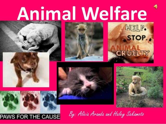 By: Alicia Aranda and Haley Sakamoto Animal Welfare