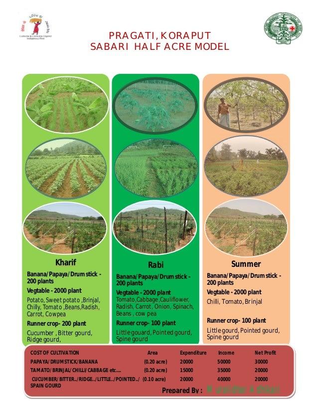 PRAGATI, KORAPUT SABARI HALF ACRE MODEL Kharif Banana/Papaya/Drumstick - 200 plants Vegtable - 2000 plant Potato, Sweet po...