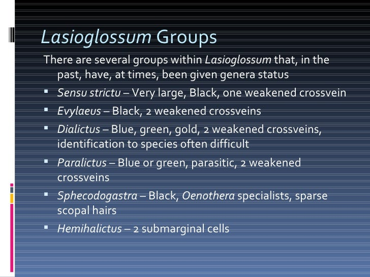 Lasioglossum  Groups <ul><li>There are several groups within  Lasioglossum  that, in the past, have, at times, been given ...