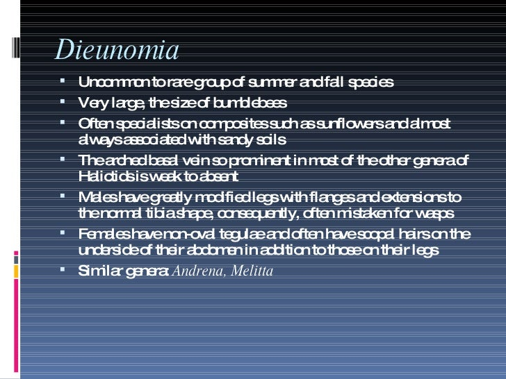 Dieunomia <ul><li>Uncommon to rare group of summer and fall species </li></ul><ul><li>Very large, the size of bumblebees <...