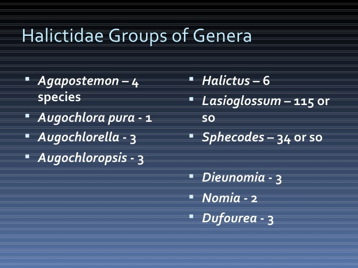 Halictidae Groups of Genera <ul><li>Agapostemon  – 4 species </li></ul><ul><li>Augochlora pura  - 1 </li></ul><ul><li>Augo...