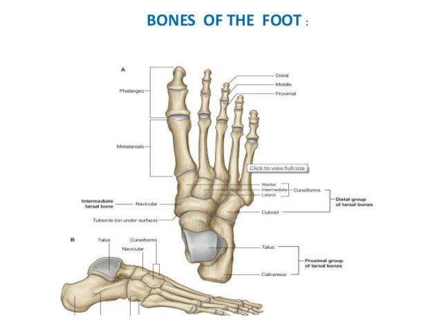 Anatomy Of A Great Picture: Hallux By Harpreet Singh