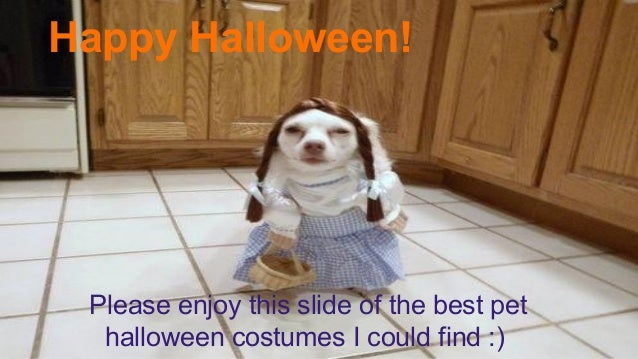 Happy Halloween!  Please enjoy this slide of the best pet halloween costumes I could find :)