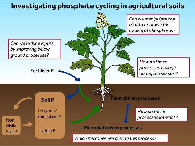 how to add phosphorus to soil naturally