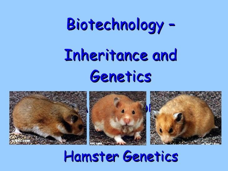 Hamster Genetics Biotechnology – Inheritance and Genetics Applications