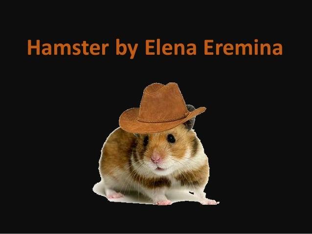 by ANNA Hamster by Elena Eremina