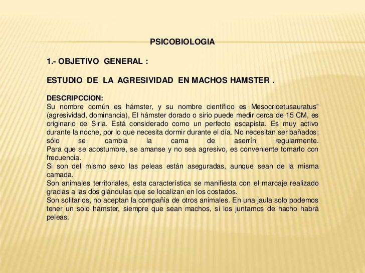 PSICOBIOLOGIA1.- OBJETIVO GENERAL :ESTUDIO DE LA AGRESIVIDAD EN MACHOS HAMSTER .DESCRIPCCION:Su nombre común es hámster, y...