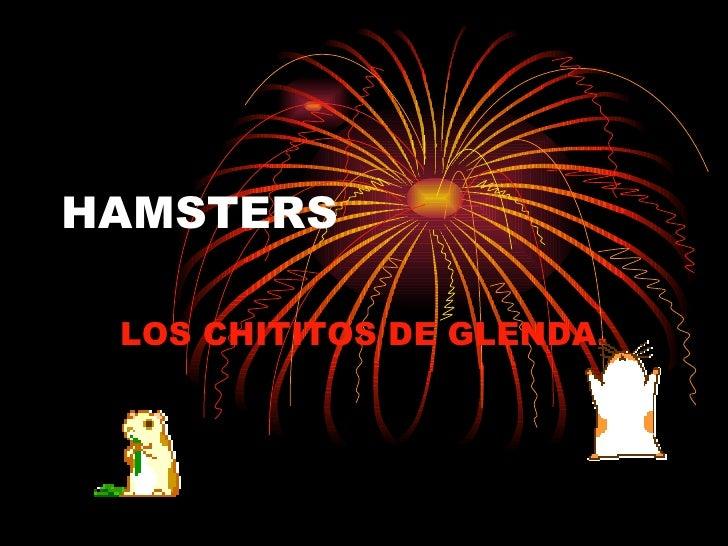HAMSTERS LOS CHITITOS DE GLENDA.
