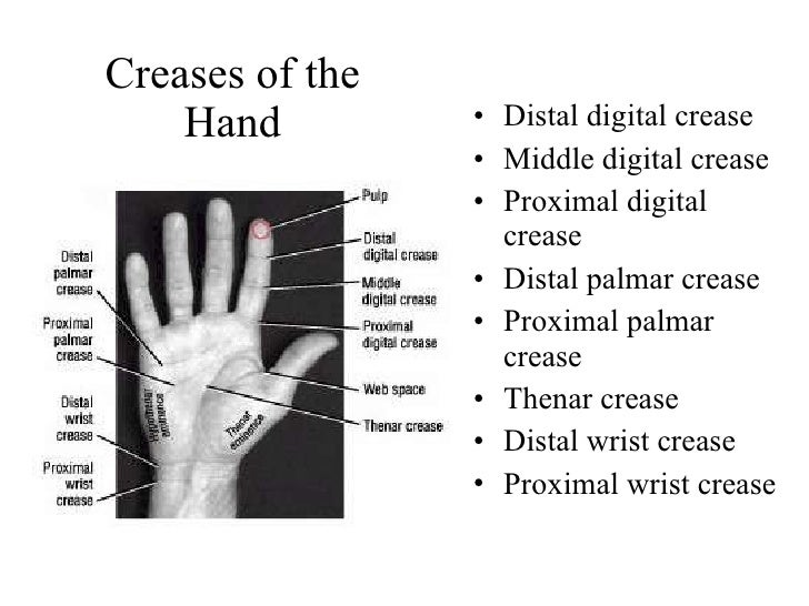 Questions on upper limb anatomy