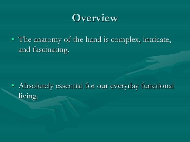 Hand anatomy new Slide 2