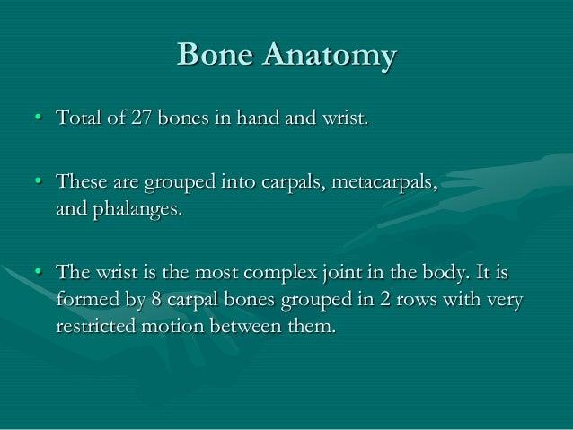 Hand anatomy new Slide 3