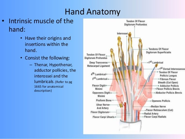 Hand Injuries By Drnil C