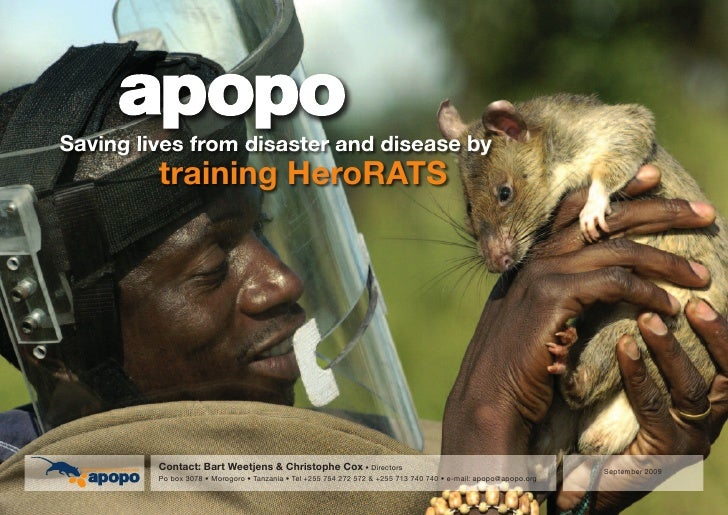 Saving lives from disaster and disease by          training HeroRATS              Contact: Bart Weetjens & Christophe Cox ...