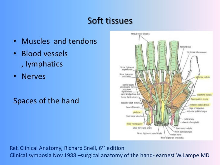 Hand Trauma Soft Tissue Injuries Overview Principles Of Management