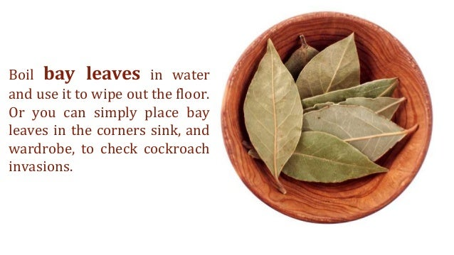 Home Remedies For Small Cockroaches In Kitchen