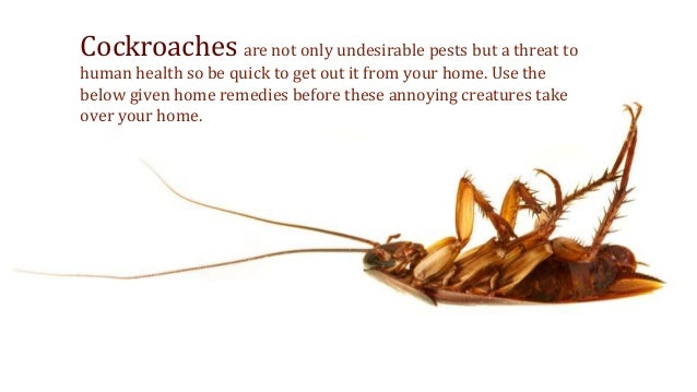 Handy Home Remedies To Deal With Cockroaches
