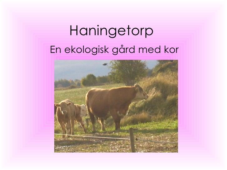 Haningetorp En ekologisk gård med kor
